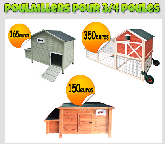 Installation d 39 une basse cour de la ferme avicole bauduin for Poules d ornement pour le jardin ou la basse cour